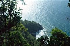 Dans la jungle martiniquaise, 1982 (RarOiseau) Tags: martinique 1982 forêt mer vert bleu plage diapositivenumérisée saariysqualitypictures v2000