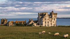 Great Scottish view (Ramireziblog) Tags: great scottish view castle sheep ocean gras kasteel schotland canon 6d uitzicht landschap landscape