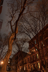Nighttime Tree in SoHo, NY, 2018. (Jack Toolin) Tags: urban urbantrees urbanlandscape lowlightphotography existinglight sonya7rii soho newyorkcity gotham trees