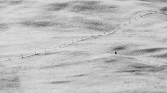 Feel Free VII (Swiss.Piton (BH&SC)) Tags: toggenburg ibringmycameraeverywhere blackandwhite schweizerphotographen schwarzundweiss noiretblanc olympusomdem5miizuikom75mmf18 olympus75mm18 mft switzerland swissamateurphotographers