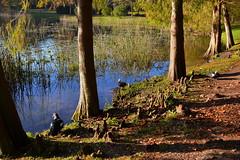 Bird Watching (npbiffar) Tags: park water tree forest wood grass bird cypress npbiffar 1685mm d7100 nikon landscape