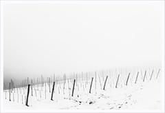 Senza titolo 131 (Outlaw Pete 65) Tags: paesaggi landscapes cielo sky vigneto vineyard pali poles neve snow inverno winter freddo cold biancoenero blackandwhite nikond600 sigma35mm cellatica lombardia italia