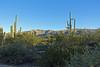 Almost Sunset Time (craigsanders429) Tags: cactus arizona mountains desert sonorandesert arizonamountains tucsonarizona latedaylight latedaylightphotography saguarocactus plants lightandshadows