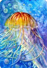 Pacific Sea Nettle Jellyfish-Watercolor on Hahnemühle Watercolor Postcard (molossus, who says Life Imitates Doodles) Tags: jellyfish sealife water watercolor postcardpainting artforthelunchbag postcardsforthelunchbag