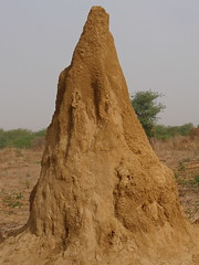 SenegalFromDeltaSaloumToMbour001 (tjabeljan) Tags: mbour moskee mosque termite termiet boabab senghor senegal africa afrika