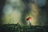 Iluminada (www.studio360fotografia.es) Tags: zeissikonvariotalon70120mm seta mushroom iluminada illuminated musgo moss bokeh desenfoque colores color olympus omd em10 macro fantasia fantasy proyector projector fungi nature naturaleza verde green