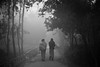 Let's have a walk (Mehdad1) Tags: blackandwhite foggy winter wintermorning