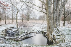 Winter returns. (Martijn van Sabben) Tags: awesome coolshot lightroom naturel sigma d500 nikond500 nikon nature netherlands staatsbosbeheer natuur nederland westerwolde holland ngc