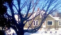Maple tree in February! - TMT 365/96 (Maenette1) Tags: maple tree winter neighborhood menominee uppermichigan treemendoustuesday flicker365 michiganfavorites project365
