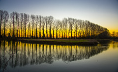 Winters Sunrise (gopper) Tags: sunrise scene scenic scenery lechlade gloucestershire oxfordshire wiltshire buscot thames river flickr ngc nikon d600 winter 2018 golden tree trees footpath riverthames swindon local relection reflections sihouette uk british february