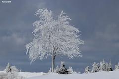 Plateau de La Verrerie sous la neige (BPBP42) Tags: nature arbre neige hiver frost snow landscape landshaft paysage