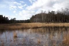 Leenderheide (Brabant) (ToJoLa) Tags: canon canoneos60d 2018 kleuren winter nature natuurgebied leenderheide noordbrabant ven heide pijpestrootje wolken clouds ontrack wandelgebied