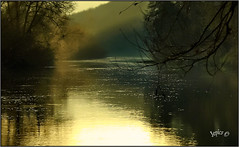 Natures Changing Hues.. (Picture post.) Tags: landscape nature green river water winter sunlight trees reflections hues paysage arbre mist brume golden hour morning