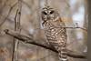 Barred Owl (NicoleW0000) Tags: barredowlowlwildwildlifebird barredowl owl wild wildlife naturephotography barred