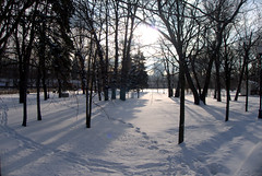 Snow morning, park (rustamsad) Tags: moscow winter rawformat lumix leica lx5 lumixlx5