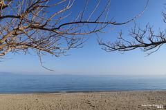 "On a winter's day... ""Calm was everything"". (Κώστας Καϊσίδης) Tags: wintertheme winterscenery winter seascape seaside sea beach trees branches sky horizon marathon greece outdoor sand nature"