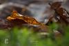 Erinnerung an den Herbst - WabiSabi Serie (LENS.ART Photographie) Tags: macro wald forest nah natur blatt waldboden d7200 nikon bokeh closeup leaves buchenblatt