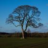365.40 - Bare tree in the sun. (AmyGStubbs) Tags: 09feb18 2018 365the2018edition 3652018 day40365 epl3 olympus olympus1442f3556iirmsc sun tree