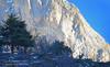 Cerfs en Montagne (gil streichert) Tags: cervus elaphe ciervo cervo montagne faune