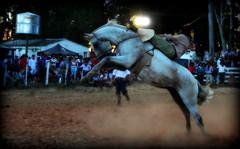 Dionatan Texera e Tranca-Rua da Coronilha (Eduardo Amorim) Tags: gaúcho gaúchos gaucho gauchos cavalos caballos horses chevaux cavalli pferde caballo horse cheval cavallo pferd pampa campanha fronteira quaraí riograndedosul brésil brasil sudamérica südamerika suramérica américadosul southamerica amériquedusud americameridionale américadelsur americadelsud cavalo 馬 حصان 马 лошадь ঘোড়া 말 סוס ม้า häst hest hevonen άλογο brazil eduardoamorim gineteada jineteada