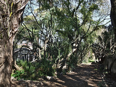 (0000ff) Tags: lisboa botanicalgarden cactus belém