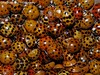 The Nest (rachael242) Tags: ladybird ladybug bug beetles nest animal insect nature abstract pattern flickr spots red colors macro