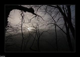 Soleil levant a travers les arbres - Bois de la Côte - Doulaize