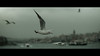Ferry to Eminönü, Istanbul (emrecift) Tags: landscape cityscape photography cold blue istanbul ferry seagulls cinematic 2391 anamorphic grain nikon d600 nikkor 85mm f18g emrecift