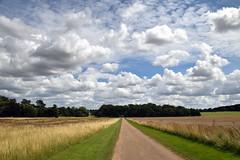 Estate Road (Worthing Wanderer) Tags: norfolk summer sunny farmland coast seaside nelson holkham burnham hero august
