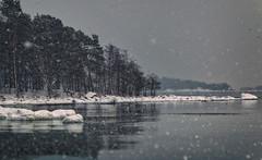 Snowy afternoon... (BigWhitePelican) Tags: helsinki finland uutela winter sea snow ice canoneos70d adobelightroom6 niktools 2018 january