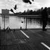 Rullino18_foto_09 (cristina peccioli) Tags: giardino pontile piccioni roma eur laghetto