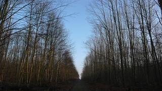 Une ballade en forêt du Madrillet et du Rouvray