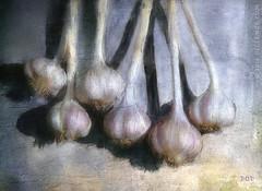 More Garlic? (sbox) Tags: stilllife painting painterly digitalpainting garlic textures sbox declanod vegetables garden gardening plants