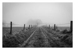 Januarmorgen im Bergischen Land (VintageLensLover (OFF FOR A WHILE)) Tags: bergischesland outdoor bw schwarzweiss monochrome