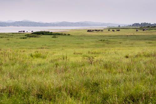Pollonaruwa