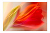 Amaryllis (SonjaS.) Tags: blumen doppelbelichtung doubleexposure amaryllis rot burningcolors flowers