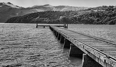 Into the bay (David Feuerhelm) Tags: pier blackandwhite bw noiretblanc schwarzundweiss contrast newzealand bankspeninsular robinsonsbay wideangle old wood jetty rails southisland hills bay nikond750 nikkor2470mmf28