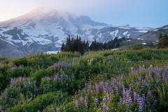 Lost in the haze (Laura Jacobsen) Tags: hiking mountains mtrainier mtrainiernationalpark nationalparks paradise volcanoes washington wildflowers