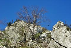 498  I grow on a rocky ground (Hejma (+/- 5400 faves and 1,7 milion views)) Tags: skały wapienne drzewa krzewy światłocień niebieskie