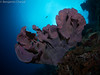 21022018-_1240117 (chevalbenjamin) Tags: philippines visayas bohol underwaterphotography underwater scubadiving dive 8mmpanasonic seaocean