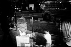 Town of the Grey Dog (Phill Jenkins) Tags: glasgow streetphotography scotland