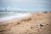 Seagulls-6 (Jeff Slinker) Tags: seagulls florida beach park ocean water birds canon 6d