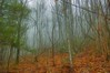 Foggy Forest 28 (Steve4343) Tags: steve4343 nikon d70 appalachian trail cherokee national forest red green blue yellow orange white clouds sky beautiful tennessee autumn beauty carter johnson county lake watauga cloud colorful woods garden gardens happy leaves rocks wildlife landscape mountain tree trees grass water wood butler foggy 28