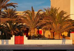 Palms, El Arenal, Mallorca, Spain (Lars Rollberg) Tags: elarenal mallorca palms spain