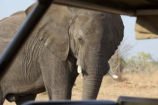 Elephant very close / Elefant ganz nah