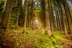 Summer 2017 (petrvujtech) Tags: france mountains summer summer2017 sun trees treesforest lesgets auvergnerhônealpes fr