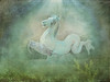 frozen spring (AlicePopkorn) Tags: spring frozen frühling horse pferd
