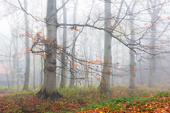 Misty Mornings - Autumn/Winter 2017 (Wilma v H-Thankfull for all your lovely comments a) Tags: mist misty autumnscenics winterscenics autumncolours autumnleaves 2017 fog foggy fallscenics fall trees dordrecht nederland netherlands achterweg dubbeldam dordtwijkestate nature outdoors herfst canoneos60d luminositymasks tkactionsv5v6panel