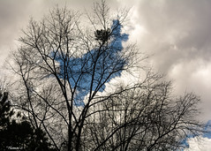Rejoice, Or Just Vanish? (that_damn_duck) Tags: clouds cloud nature