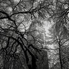 Portland (austin granger) Tags: portland church trees snow winter branches square film gf670